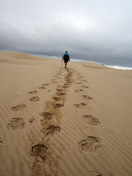 John Dellenback Dunes Trail Oregon Dunes National Recreation Area