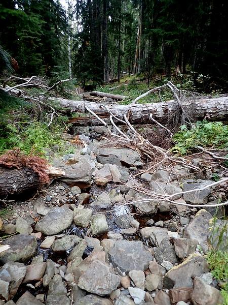 Wiley Camp Rogue-Umpqua Divide Wilderness Oregon