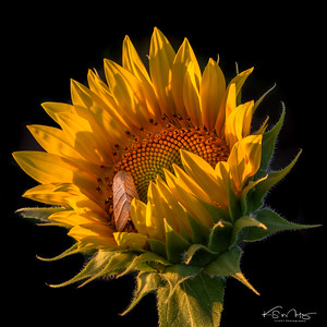 Sunflower, Leavenworth County, KS