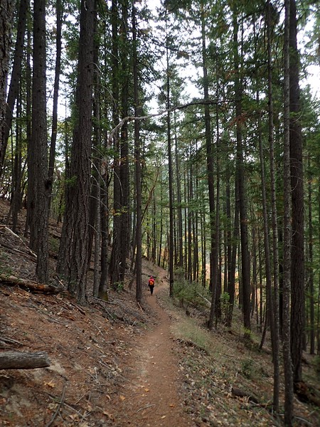 Collings Mountain Trail Applegate Lake Oregon