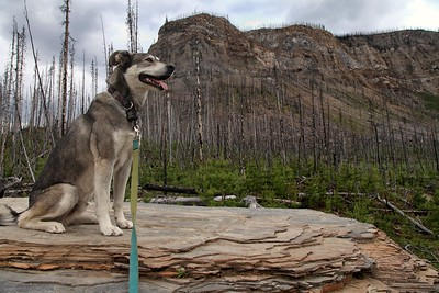 Jasper in Marble Canyon