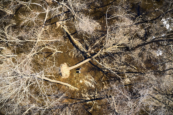 2019 UWL Drone Floodplain Forest Goose Island Park 0019