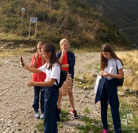 Seventh Graders Take on Tamaro