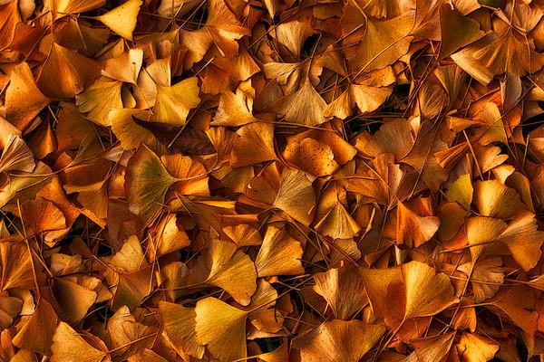 Golden Leaves - Irving Freeman - PSA Score 9