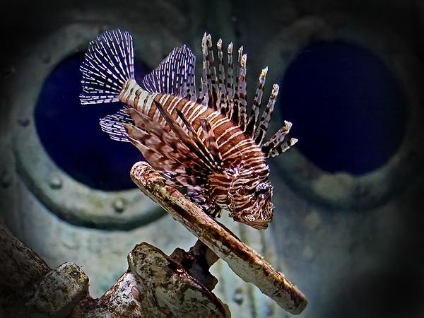3 Lion Fish  PSA 12