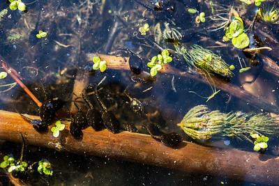 Baby Froggies
