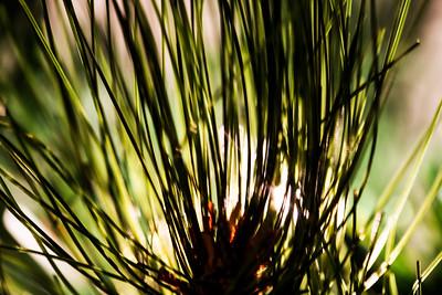 Fake Pine