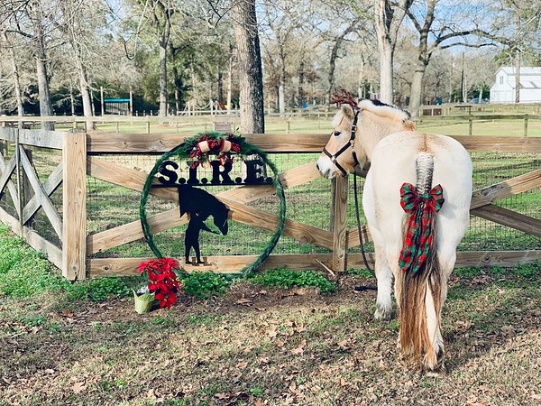 SIRE Entrance Holiday photo