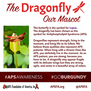 The Dragonfly: Our Mascot