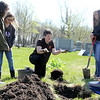 Carol Tillman, floating officer of the Altamont Garden Club, explains how roots spread when properly planted during the Arbor Day event at the Union Cemetery. Graham Milldrum