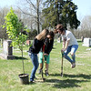 Maci Tonn and another Altamont FFA student work to begin planting a tree as Lisa Thompson jumps to put more force on the shovel during an Arbor Day event at the Union Cemetery. Graham Milldrum photo