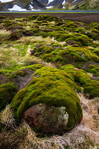 Mossy rocks at Stromness, South Georgia