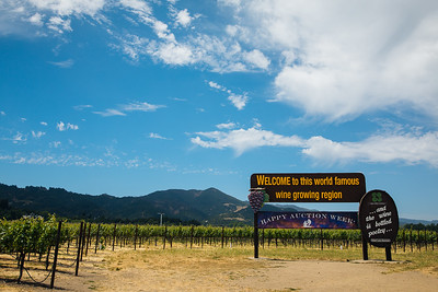 Happy Auction Week!  Photo by Alexander Rubin for Napa Valley Vintners
