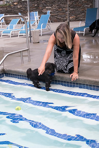 23-Nancy_Pisano_tries_to_convince_her_dog_George_to_swim_for_a_tennis_ball