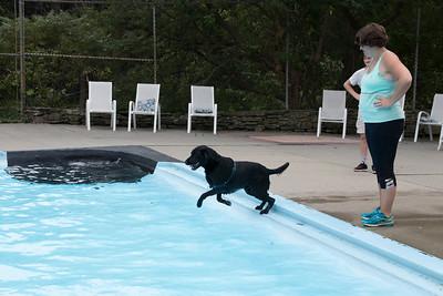 22-Erin_Runstein_watches_Brady_jump_into_the_pool_to_retrieve_his_toy