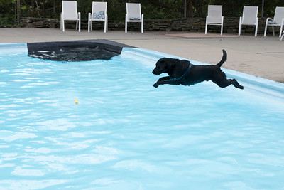 21-Brady_jumps_into_the_pool_to_retrieve_his_wood_toy
