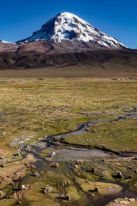 BOLIVIA, ALTIPLANO-SAJAMA-7049