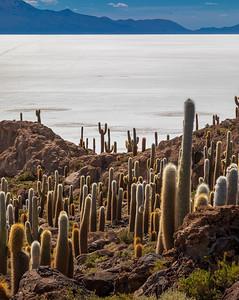 BOLIVIA, SALAR DE UYUNI - ISLA INCAHUASI-7464