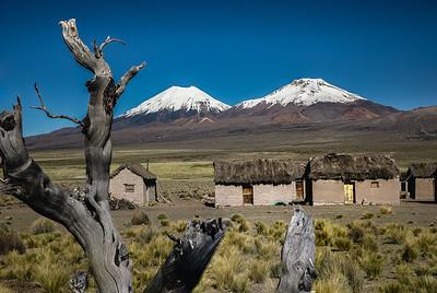 BOLIVIA, ALTIPLANO - SAJAMA-7262