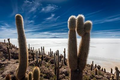 BOLIVIA, SALAR DE UYUNI - ISLA INCAHUASI-7260