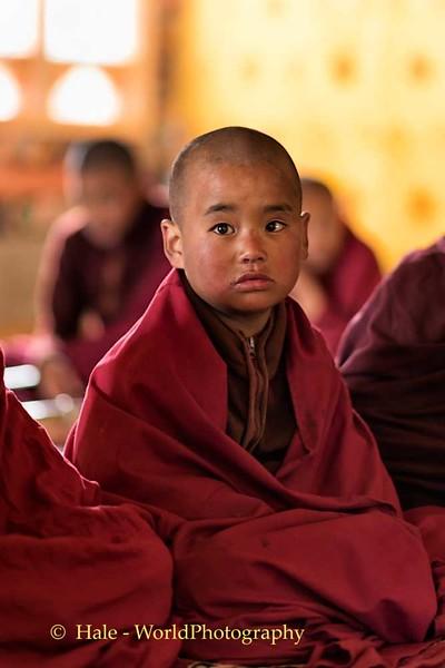 Young Monk of Khewang Lhakhang, Phobjhika Valley