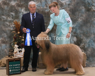 new CH BOW Specialty Briard