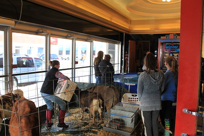 Charles Pritchard - Oneida Daily Dispatch The lobby of the Kallet Civic Center holds not only a trout pond for potential young fishers, but a small petting zoo featuring donkeys, goats, and ponies on Feb. 3, 2018