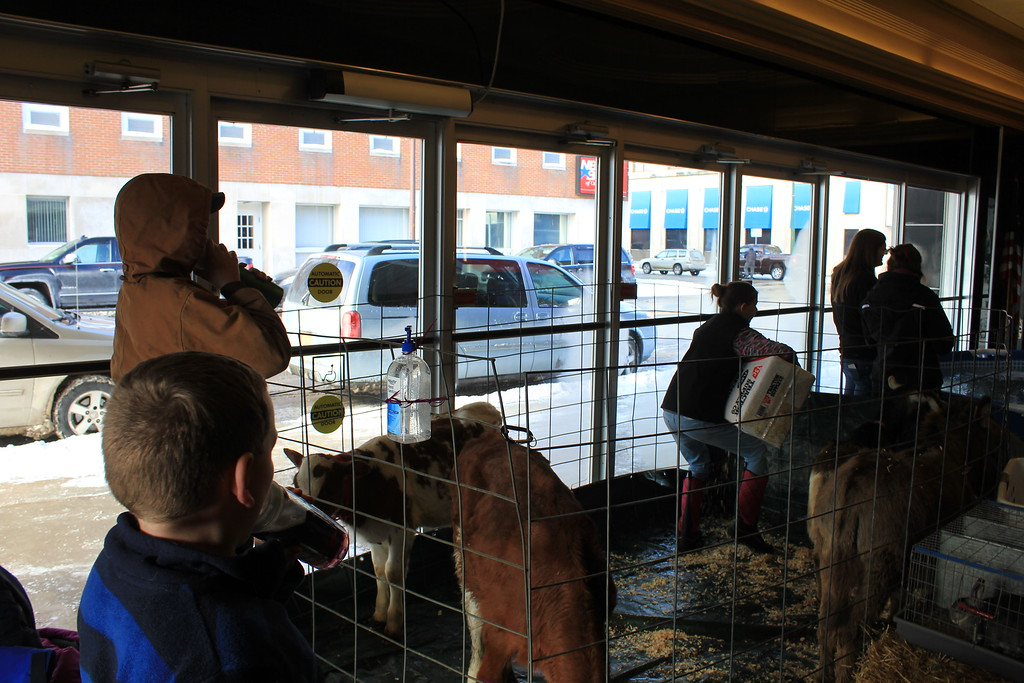 . Charles Pritchard - Oneida Daily Dispatch The lobby of the Kallet Civic Center holds not only a trout pond for potential young fishers, but a small petting zoo featuring donkeys, goats, and ponies on Feb. 3, 2018