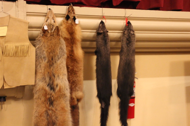 Charles Pritchard - Oneida Daily Dispatch Two fox pelts and two fisher-cat pelts he's trapped at the CNY Sportsman Show  on Feb. 3, 2018