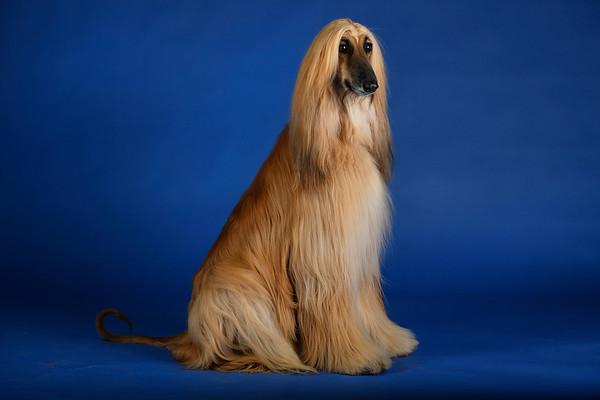 2018 CO Kennel Club dog show