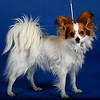 Colorado-Kennel-Club-Dog-Show.JPG