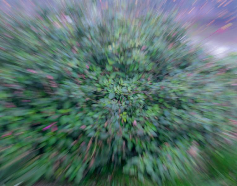 CarolCrosson_OutOfFocus_Wk2.4