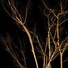 CarolCrosson_LightPainting_Wk11.14