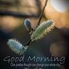 AngeliaPeterson_MorningRoutine_wk13