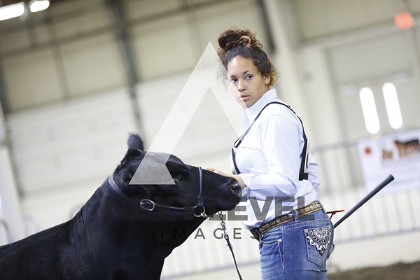 2016 Jackpot Heifer Ring Shots
