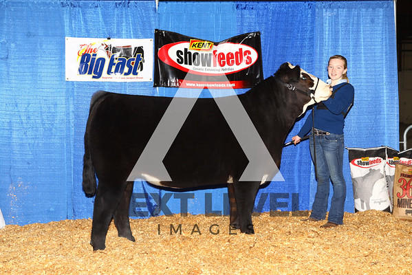 2016 Jackpot Steer Backdrop
