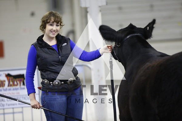 2016 Jackpot Steer Ring Shots