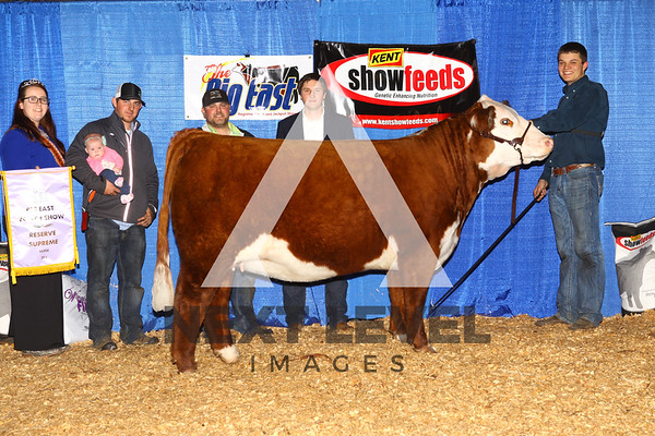 2016 Youth Heifer Backdrop