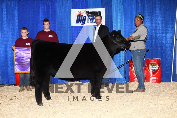 Big East 2013 Jackpot Heifer Backdrop