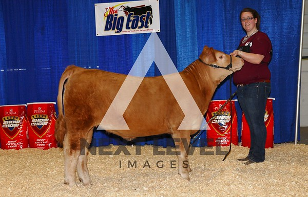 Big East 2013 Youth Heifer Backdrop