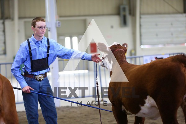 Big East 2014 Jackpot Heifer Ring Shots