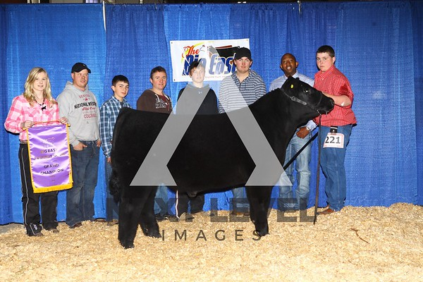 Big East 2014 Jackpot Steer