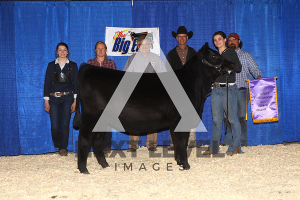 Big East 2015 Heifer Backdrop