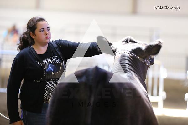 Big East 2015 Jackpot Heifer Ring Shots