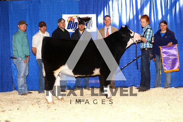 Big East 2015 Steer Backdrop