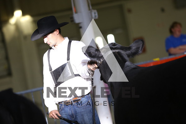 Big East 2015 Youth Heifer Ring Shots
