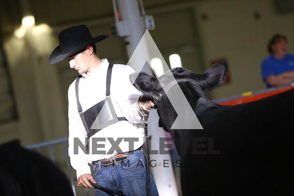 Big East 2015 Youth Heifer Ring Shots