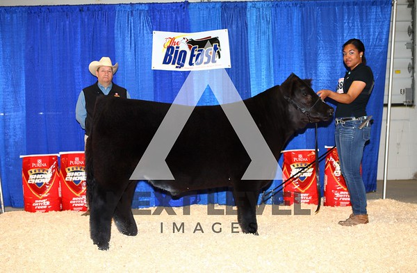 Big East2013 Jackpot Steer Backdrop