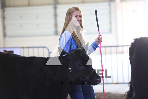 Big East2014 Youth Heifer Ring Shots