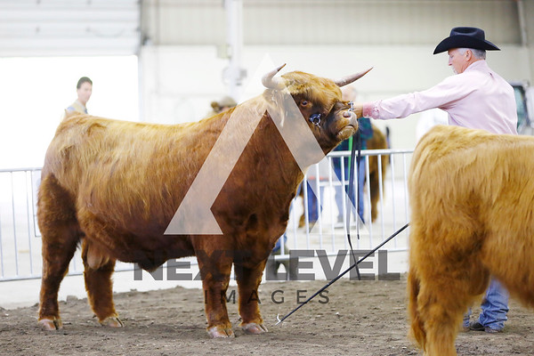 NE Highland Show 2016 Ring Shots